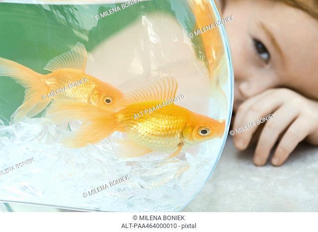 Little girl peeking around goldfish bowl, close-up