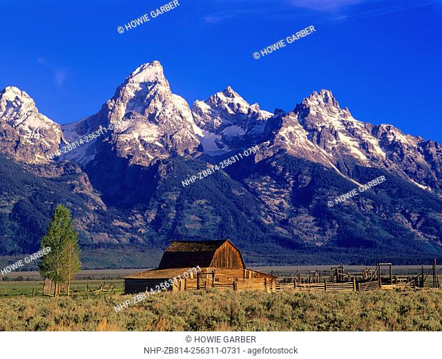 Morning light on the Tetons and an old barn. Grand Teton National Park, Wyoming