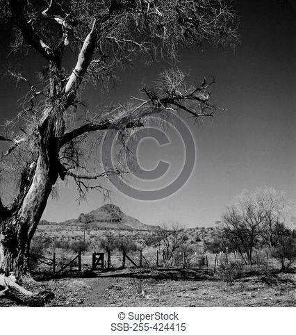 USA, Arizona, Ranch country and trees near Nogales