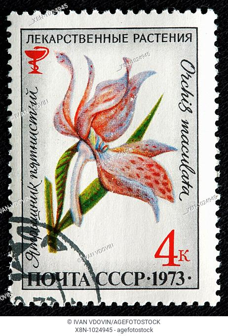 Orchis Dactylorhiza maculata, Heath Spotted Orchid, drug plants, postage stamp, USSR, 1973