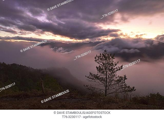 Sea of clouds and lone pine tree, Kamanbaneng Peak (Marlboro Country), Sagada, Mountain Province, Philippines