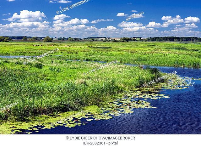 Narew River near Lapy town, Narwianski National Park, Poland, Europe