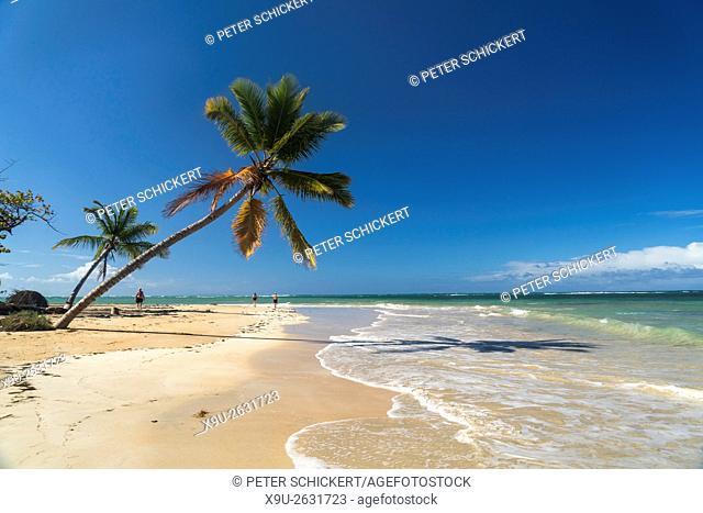 palm fringed sandy beach of El Portillo, Las Terrenas, Samana, Dominican Republic, Carribean, America,