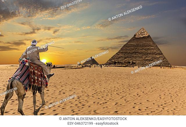 A bedouin on a camel in front of the Great Pyramids of Giza