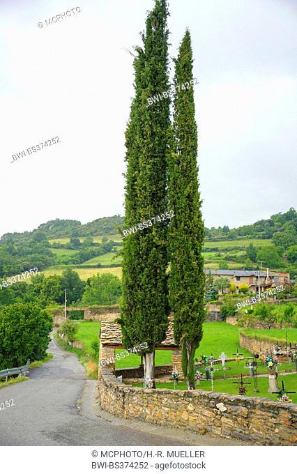 Italian cypress (Cupressus sempervirens 'Stricta'), cultivar Stricta, Spain, Katalonia