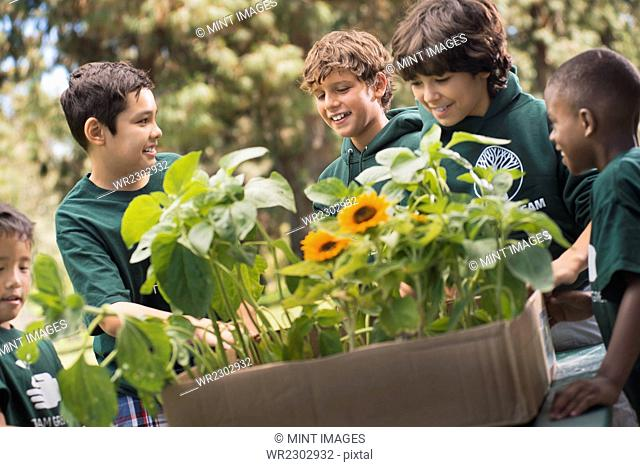 Children in a group learning about plants and flowers looking at sunflowers and young plants