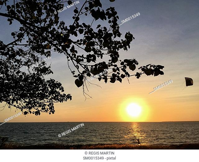 Child flying a kite during sunset and tree branches silhouettes at Cullen Bay Beach in Darwin, Northern Territory, Australia