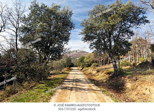 The Molinillo road in the Montes de Toledo  San Pablo de los Montes  Castilla la Mancha  Spain