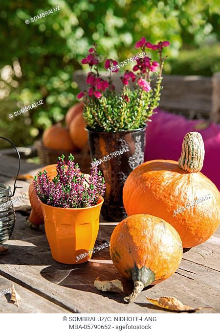 Pumpkins and heather