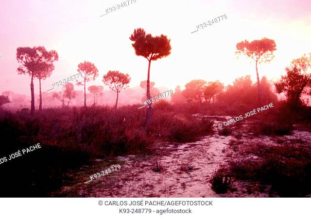 Sunrise at Parque Nacional de Doñana. Huelva province. Spain