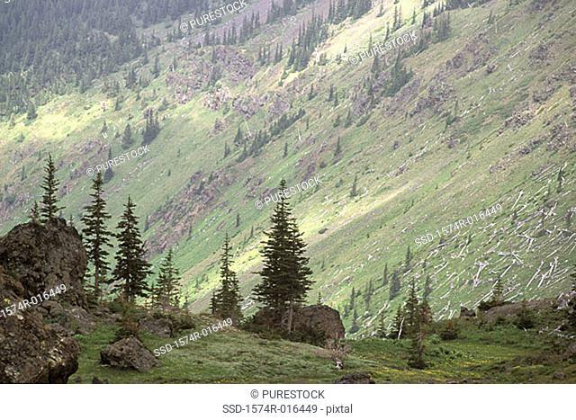 Olympic National Forest Washington USA
