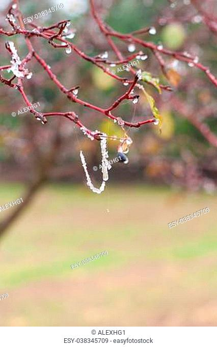 Tree branches with ice crystals close up