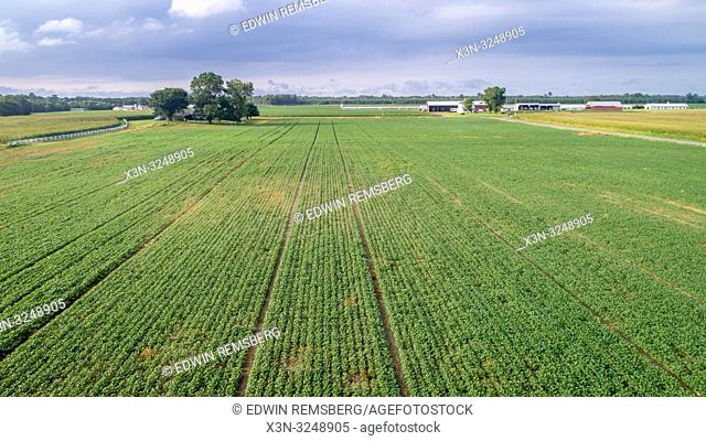 Aerial view corn field with farm buildings in the distance, Pokomoke, Maryland