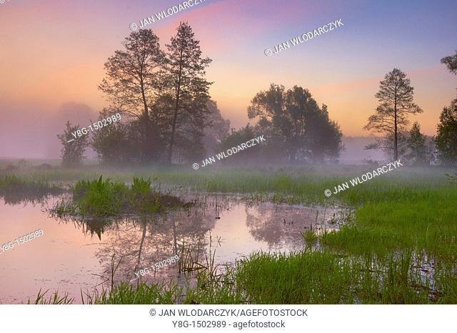Before sunrise, Narew National Park, Poland, Europe
