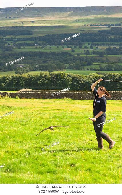 A Falconry display at Bolton Castle near Leyburn in North Yorkshire , England , Britain , Uk