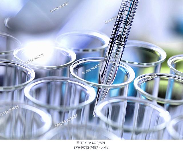 Graduated pipette placing a sample into test tubes in a laboratory
