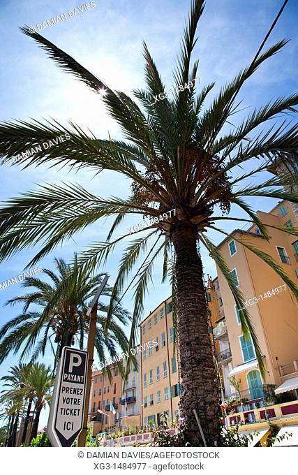 Palm trees and mediterranean buildings, Menton, Cote d'Azure, France
