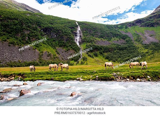 Flock of horses at Herdalssetra mountain summer farm, Møre og Romsdal, Norway / Pferdeherde auf der Alm Herdalssetra, Møre og Romsdal, Norwegen