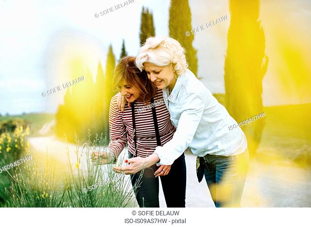 Two mature female friends looking at wildflowers on rural road, Tuscany, Italy