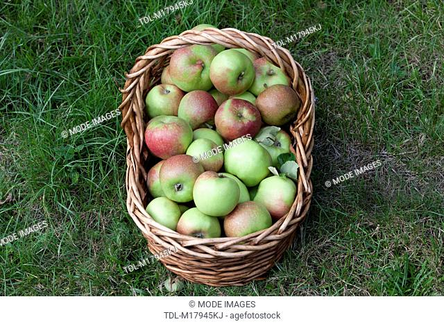A basket of apples on the grass, view from above