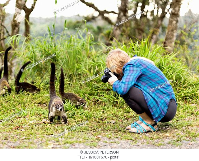 Woman taking photos of coatis living in the wild
