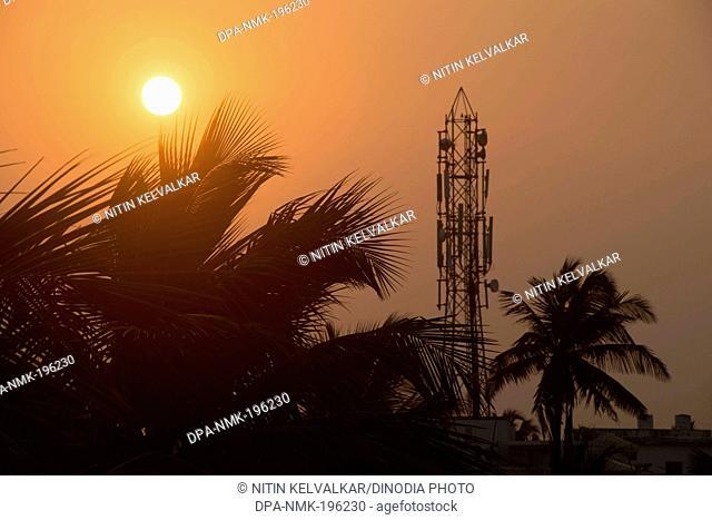 Palm tree, puri, orissa, india, asia