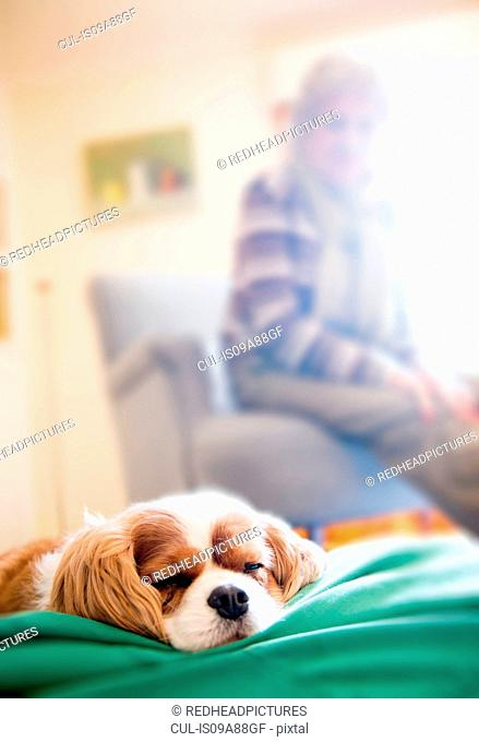 Dog sleeping with senior woman in background