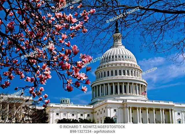 U S  Capitol in spring, Washington, DC