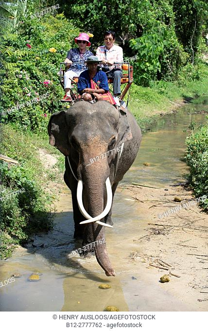 Elephant (Elephas maximus) with tourists for a small trip in the jungle., Koh Samui, Thailand