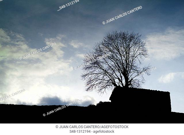 Casa y árbol a contraluz en Arredondo  Cantabria  España