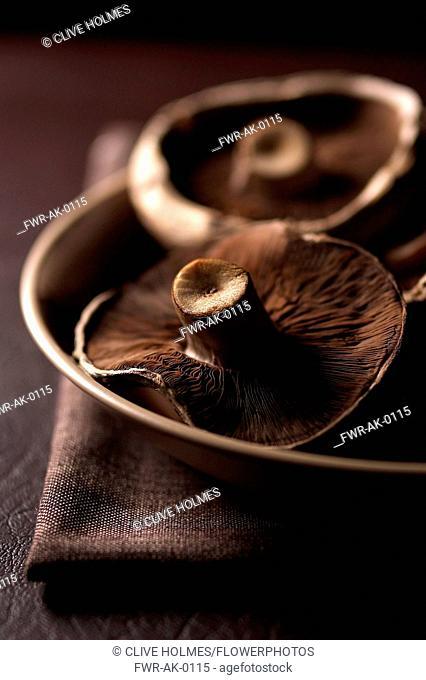 Mushroom, Portobello mushroom, Psalliota bisporus, Studio shot of brown coloured fungi
