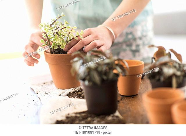 Woman repotting flowers