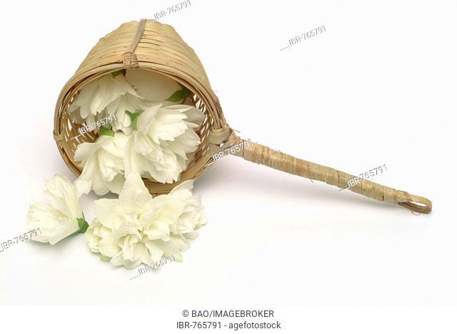 Yellow Jessamine, Carolina Jasmine or Evening Trumpetflower (Gelsemium sempervirens), medicinal plant, petals in a wooden scoop