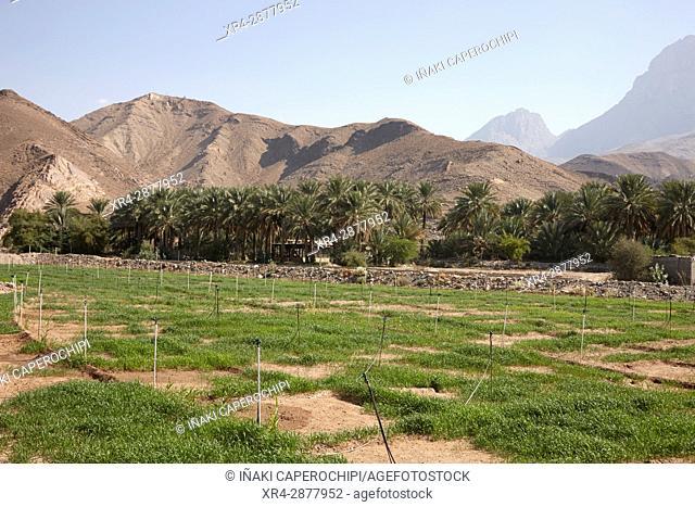 Necropolis de Al Ayn, Oman