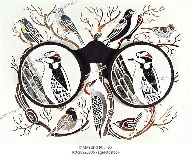 Binoculars and bird watching