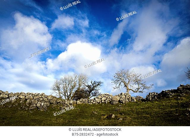 Rural landscape with blue sky, clouds and trees. Hubberholme, Skipton, North Yorkshire, England, UK