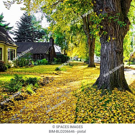 Autumn in Residential Area