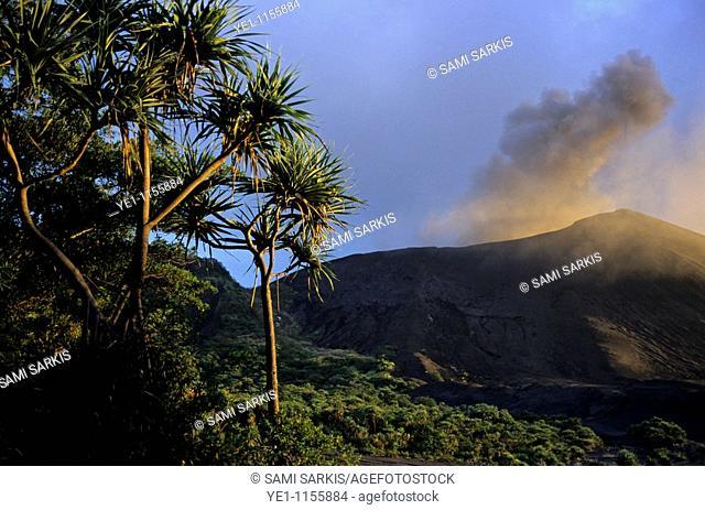 Pandanus (Pandanus tectorius) trees on an ash plain in front of the active volcano, Mount Yasur, Tanna, Vanuatu