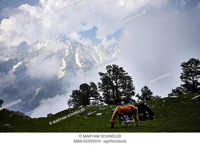 the Indian Himalayas, horses, Indrahar pass, snow summit, Dhauladhar, Himachal Pradesh, India