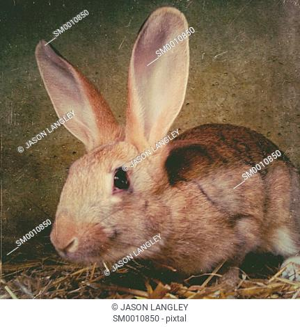 Young rabbit in cage