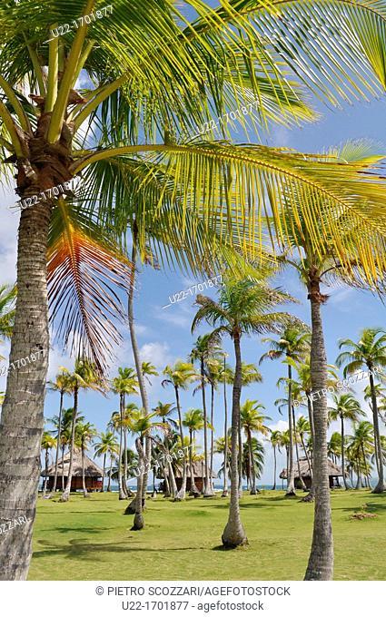 San Blás Panama: palm trees of Yandup Lodge, on a little island of Kuna Yala