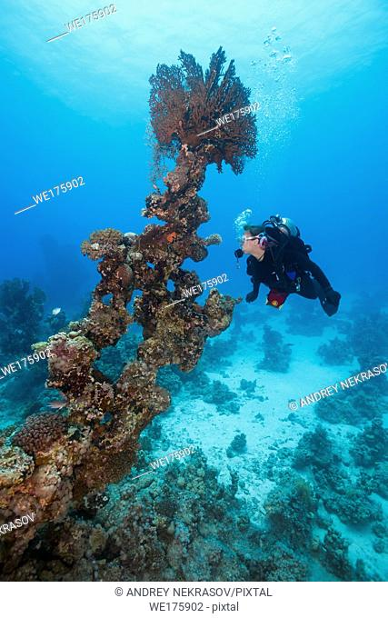Female scuba diver look at on Coral pillar