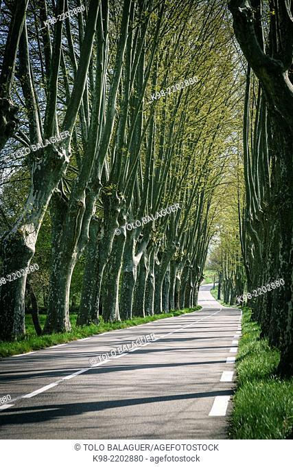 Country road, Luberon Regional Park (Parc naturel régional du Luberon). Provence, France
