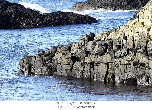 downfaulted basalt rock layers part of the county antrim coastline at Ballintoy county antrim northern ireland