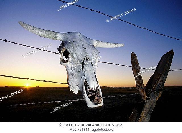 Steer skull on fence, Oakdale, California, USA