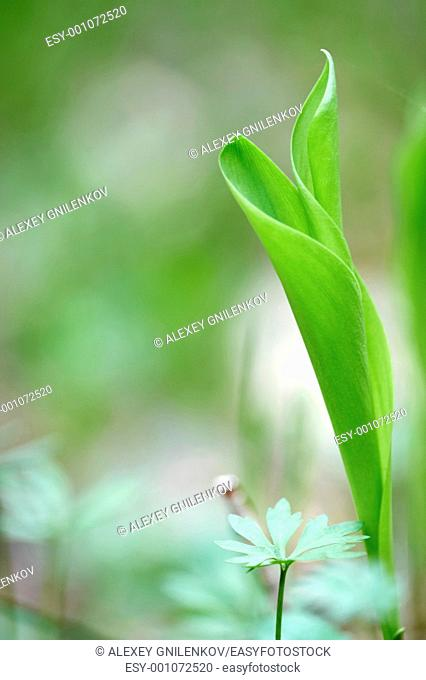 Natural background with lily of the valley