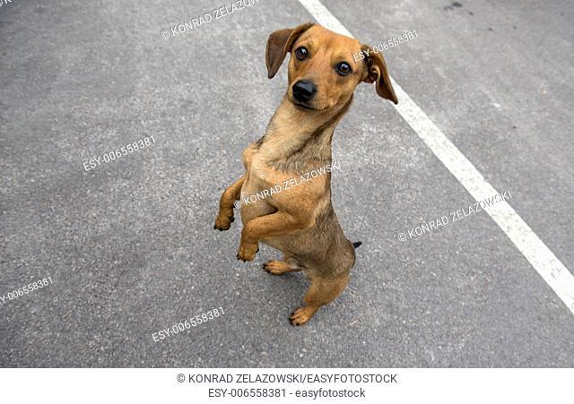 Dog in Chernobyl town, Chernobyl Nuclear Power Plant Zone of Alienation, Ukraine