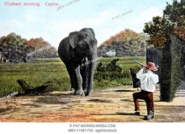 Absurd mock-up of elephant hunting in Ceylon/Sri Lanka, old postcard c1920