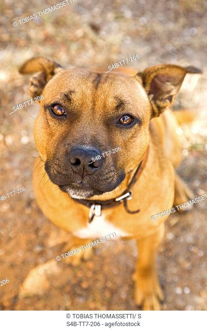 Dog sitting, Ballarat, Victoria, Australia