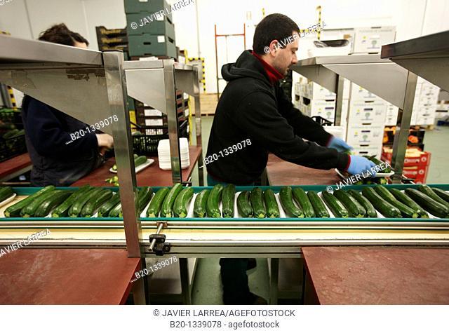 Packing zucchini, Mercabilbao fruits and vegetables wholesale market, Basauri, Bilbao, Bizkaia, Euskadi, Spain